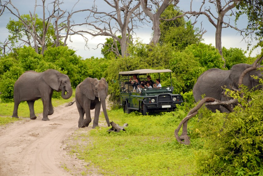 Game drive in Chobe National Park (Shutterstock)