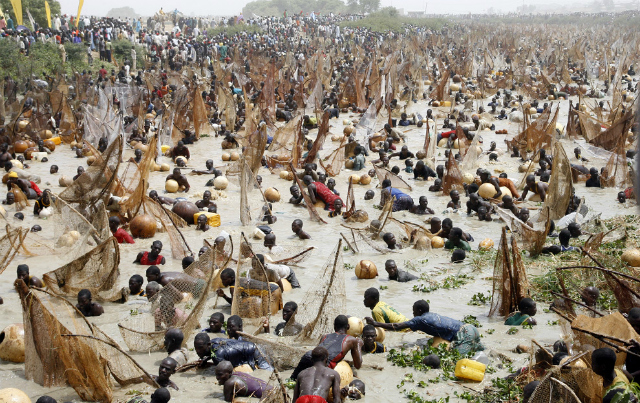 Argungu Fishing Festival (courtesy of crviewer.com)
