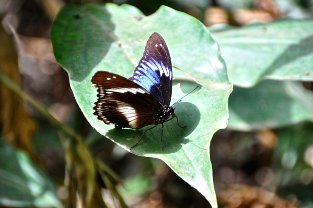 Butterfly on Afi mountain, Cross River, Nigeria (courtesy of edgymix.com)