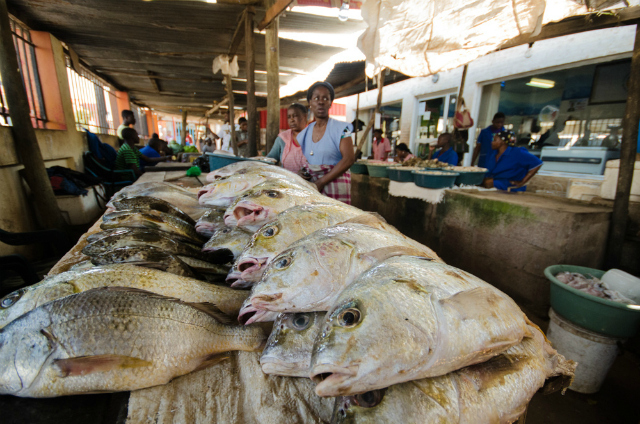 Fish market, Maputo. Photo by Sarah Duff