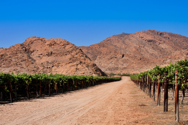 Vineyard near the Orange River, South Africa (Shutterstock)