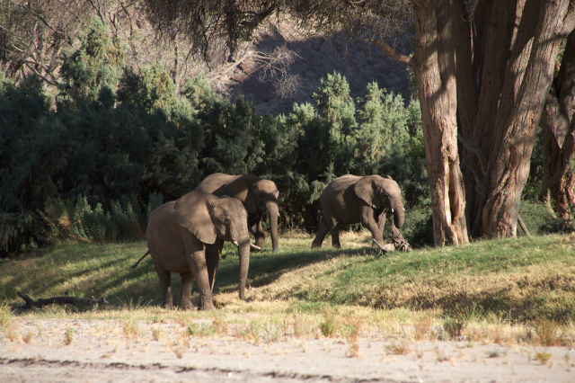 Elephants in the Skeleton Coast desert (Shutterstock)