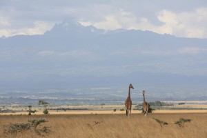 Aberdare National Park. Kenya (Shutterstock)