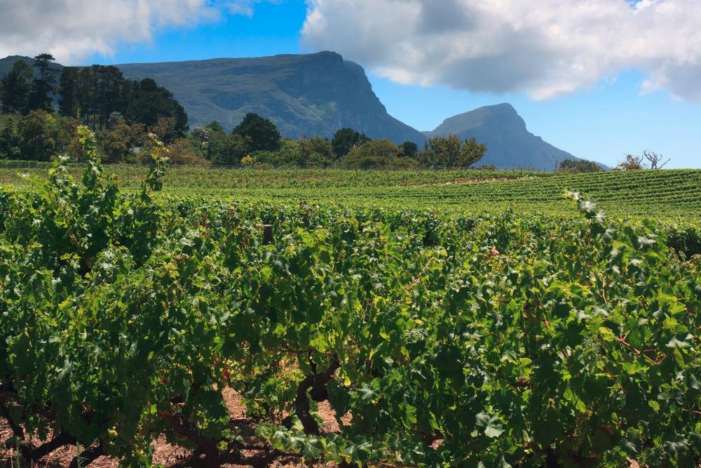 Constantia winelands, Cape Town (Shutterstock)