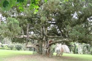 Aburi Botanical Gardens, Ghana (Erik Kristensen / Wikimedia Commons)