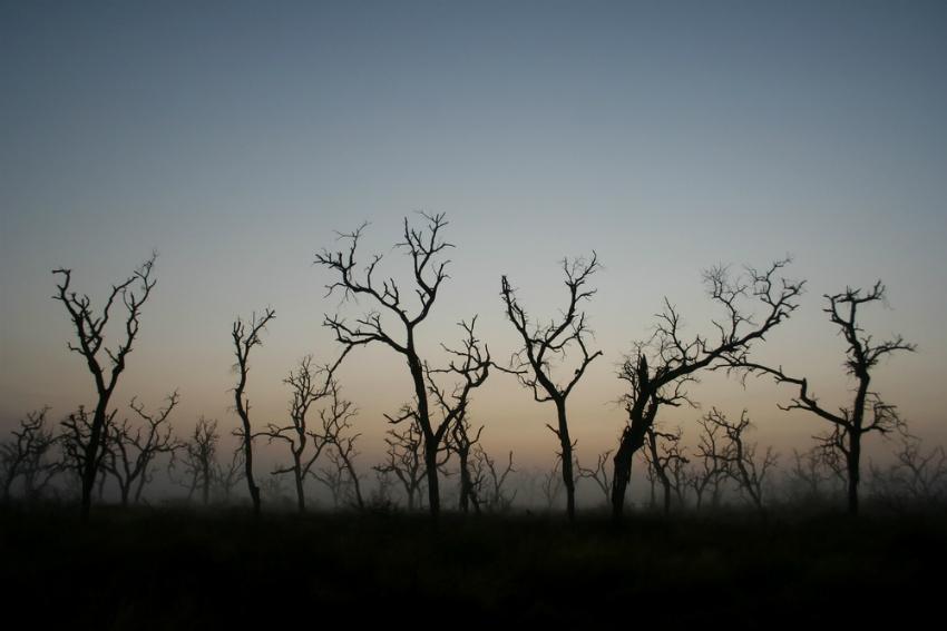Hlane National Park, Swaziland (Shutterstock)