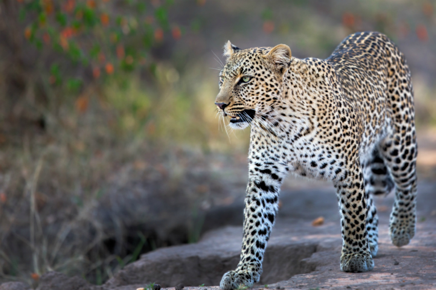 15 Best Places to Spot the Big Five on Safari