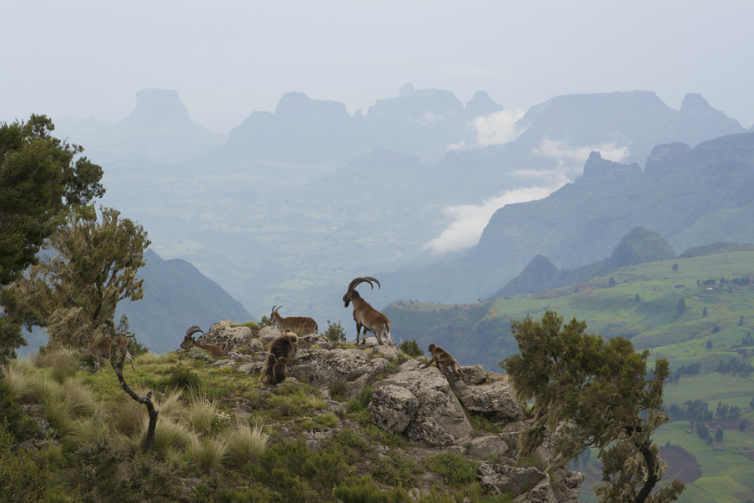 Ethiopia's Simien Mountains No Longer Threatened