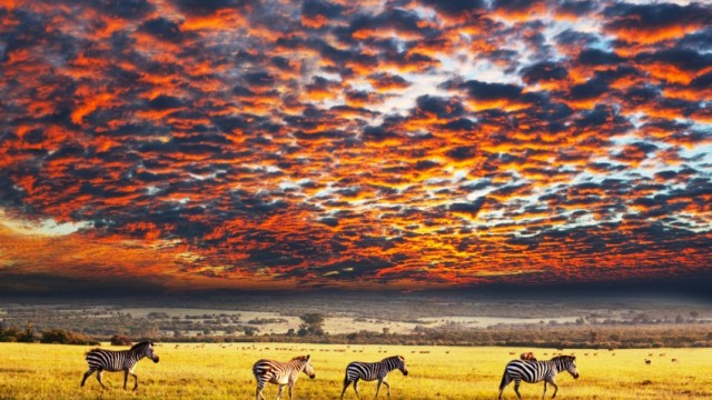 sunset savanna