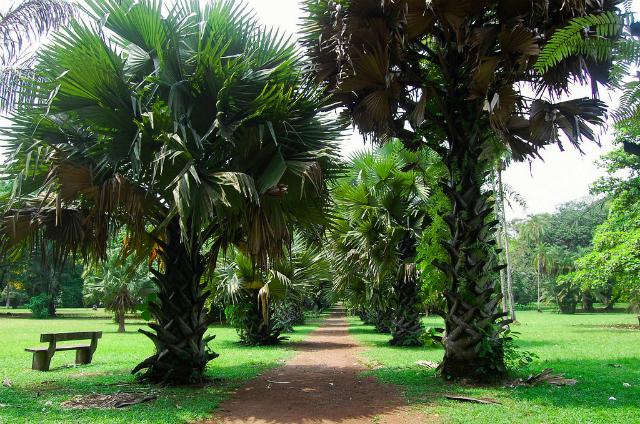 Limbe Botanic Gardens, Cameroon (courtesy of CameroonVisit.com)