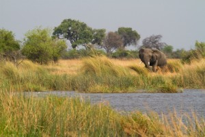 An elephant in Mamili National Park, Namibia (Shutterstock)
