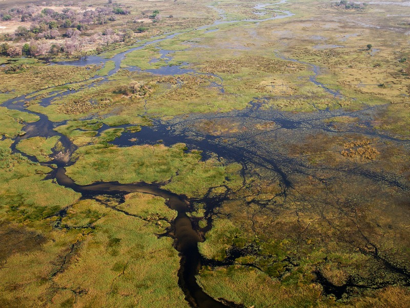 Okavango Delta, Botswana (Shutterstock)