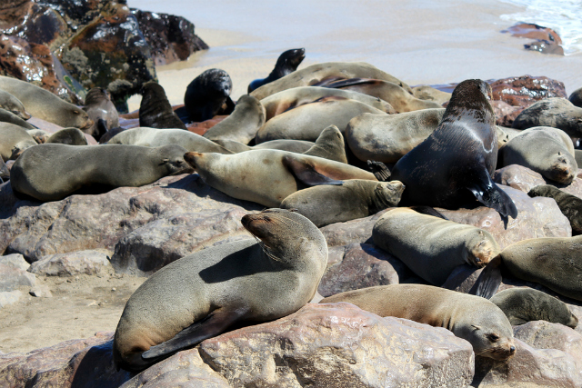 Seals at Cape Cross Reserve, Namibia (Shutterstock)