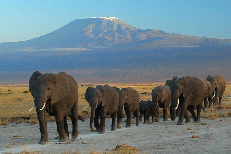 wildlife parks in east africa
