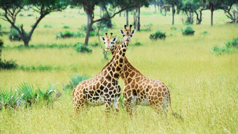 Best Game Parks and Reserves in Uganda