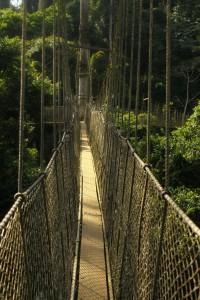 kakum-tree-walk - NM