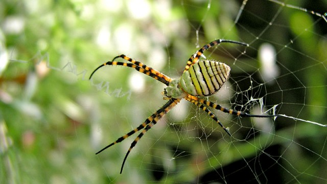 The Most Horrifying Spiders and Insects in Africa