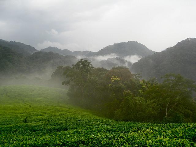 Nyungwe Rain Forest (Flickr/Rachel Strohm)
