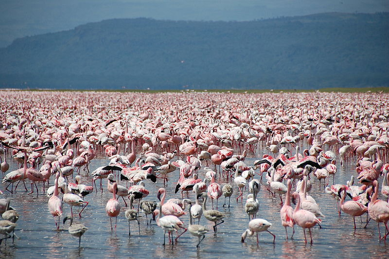 Lake Nakuru (Syllabub/Wikimedia Commons)