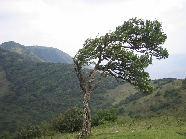 Ngong Hills (Rotsee2/ Wikimedia Commons)