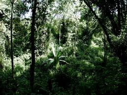 Kakamega Rain Forest, Kenya (Wikimedia Commons)