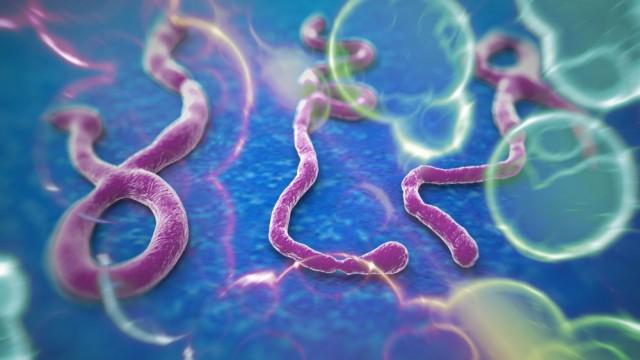 Virus Ebola dan Penyebarannya