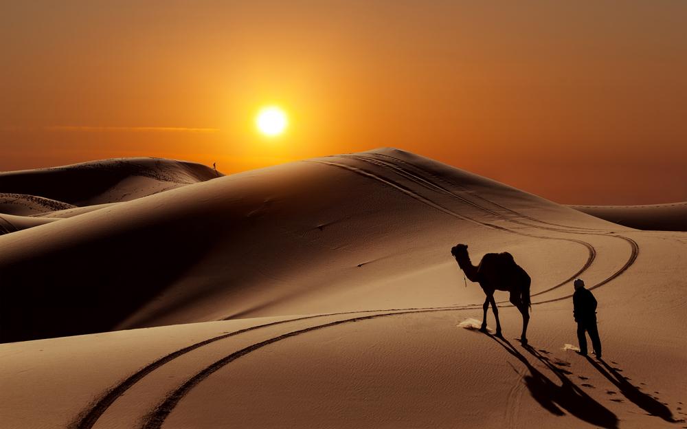 sahara sunset camel