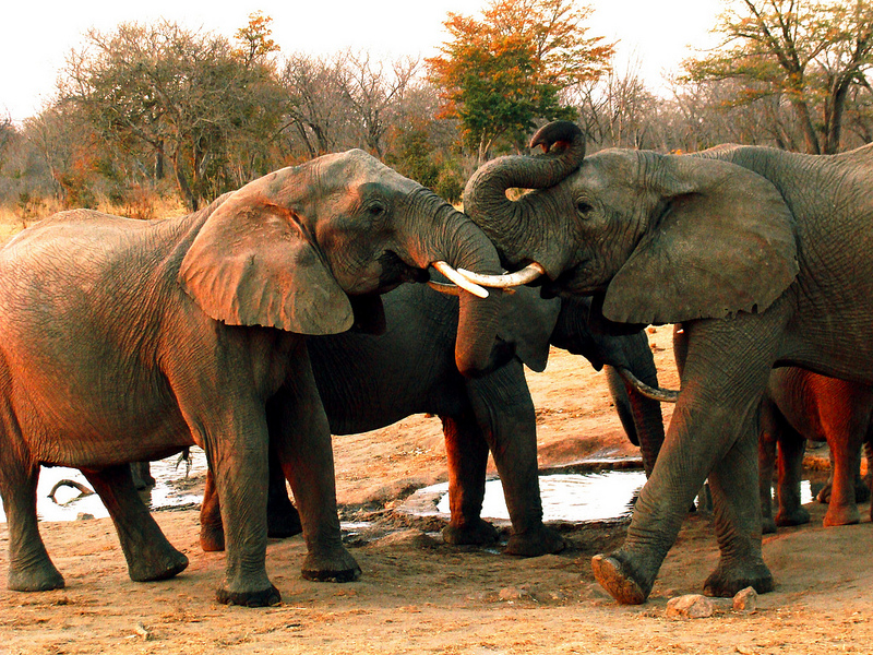 Photo Of The Day: Elephants In Hwange National Park