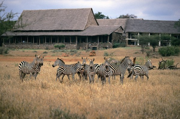 Photo/Courtesy Serena Kilaguni Lodge