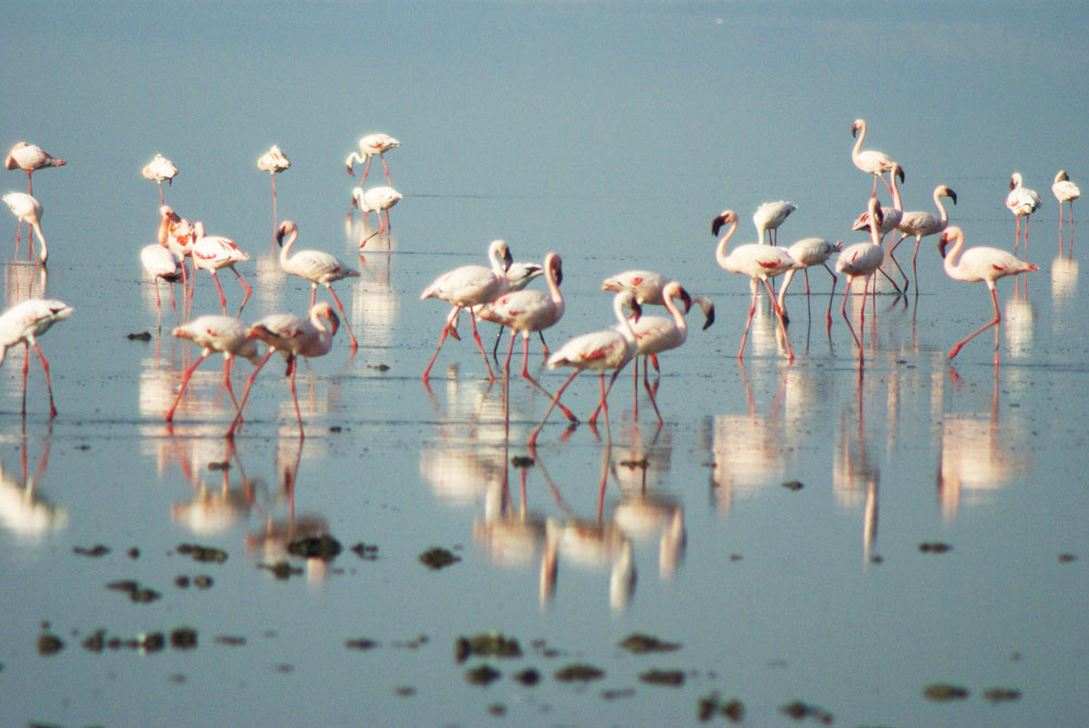 Photo Of The Day: Flamingos At Lake Natron
