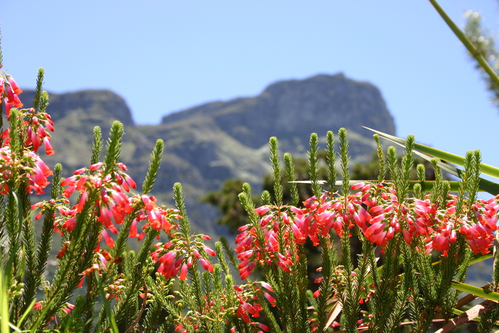 kirstenbosch sculpture