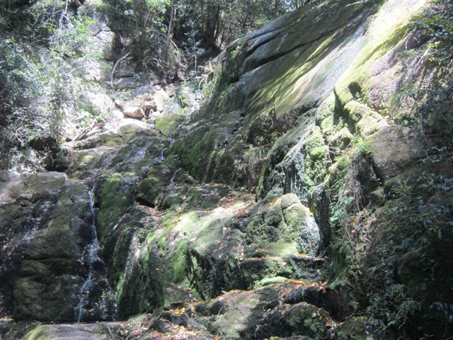 kirstenbosch waterfall