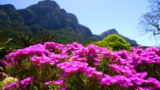 Photo Of The Day: Spring Flowers In Kirstenbosch
