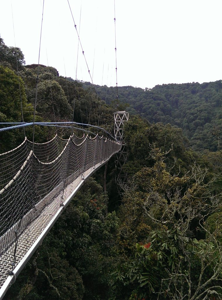 Canopy walk on the Igishigishi Trail (author photo)