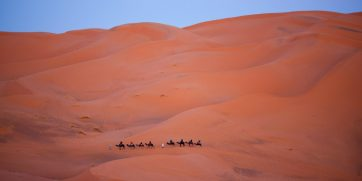 Camel trekking in Erg Chebbi, Morocco. Photo: Shutterstock