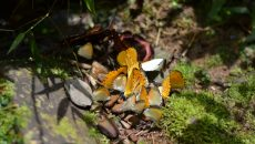 nyungwe butterflies