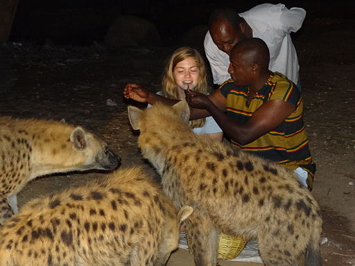 Feeding hyenas by mouth. (msafari2425/Wikipedia Commons)