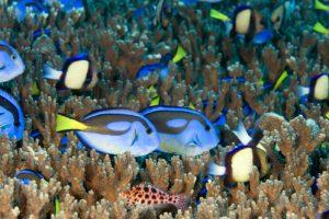 aliwal shoal fish