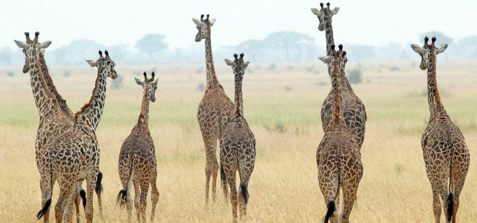 experiences in Tanzania