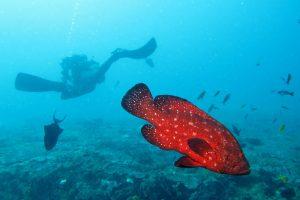 sodwana fish