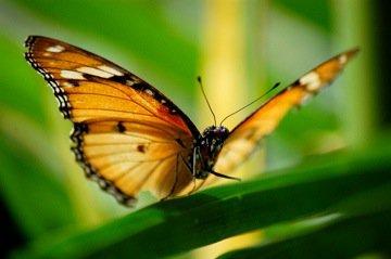 Courtesy of Zanzibar Butterfly Centre