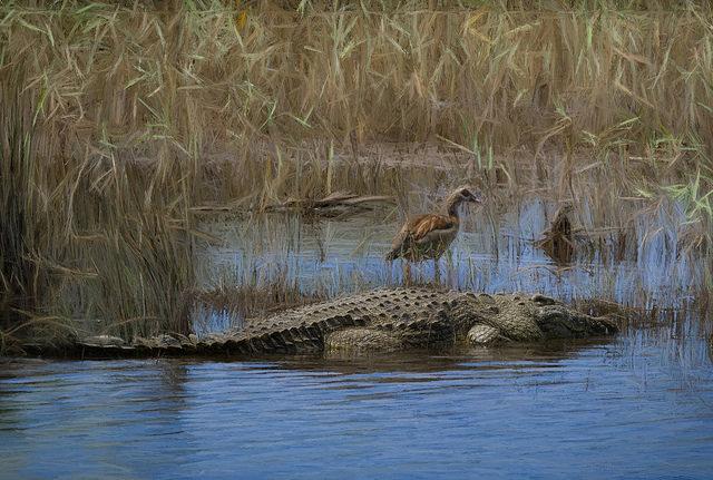 bird on top of crocodile
