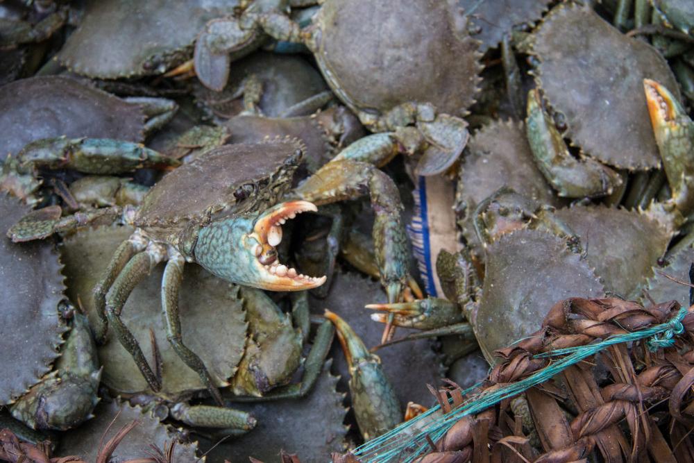 beira crabs