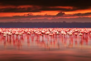 15 Attractions In Kenya To Add To Your Bucket List