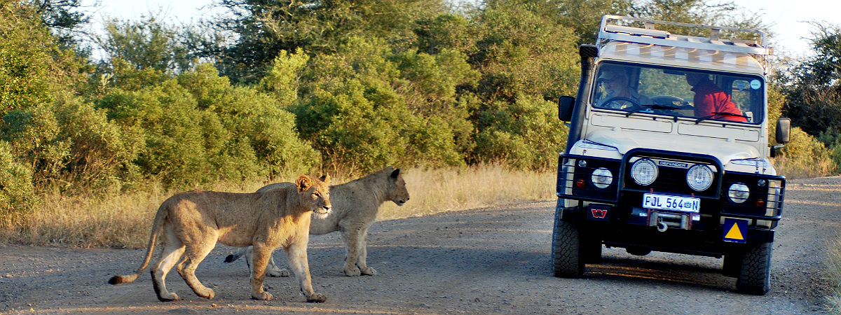 10 Things You Didn T Know About Kruger National Park