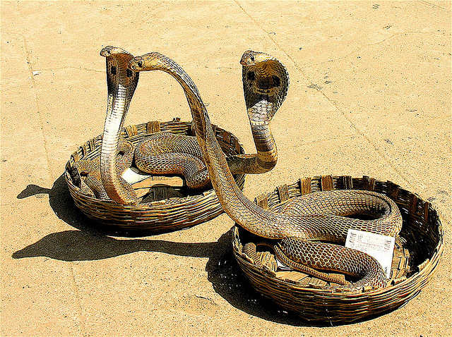 mouth snakes