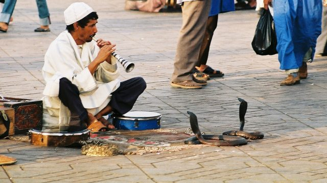 15 Things You Didn't Know About Snake Charming