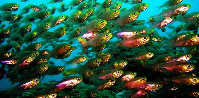 watamu fish