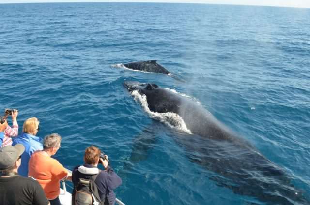 15 Best Places To Go Whale Watching
