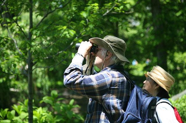 Birdwatching tour in Cameroon